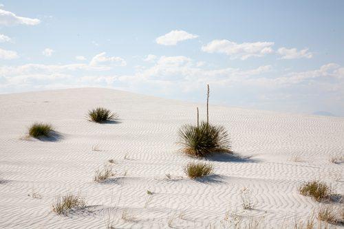 white-sands-dunes-yucca
